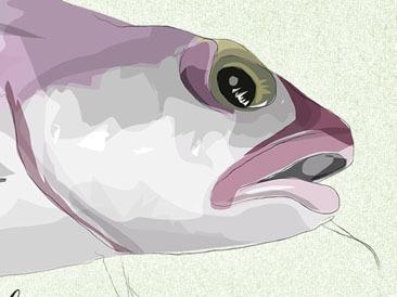 ALMERÍA especies pesqueras
